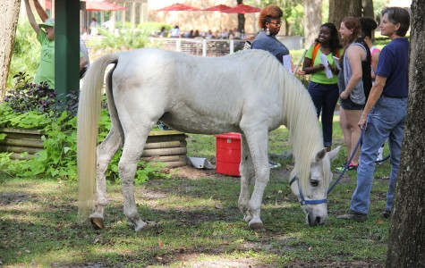 Horses Relax on JU Campus