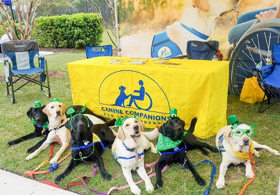 STEP raises puppies with a purpose